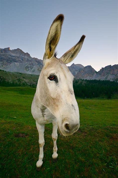 funny donkey cute donkey design swan