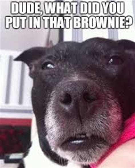 stoned dog meme collection images