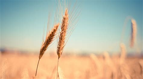 Entry without a degree is possible in an assistant underwriter role, working as a junior underwriter or insurance technician in an underwriting team. Wheat growers address trade and crop insurance challenges | Iowa Agribusiness Network