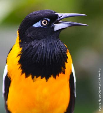 wildlife agency adds bird species to protected migratory