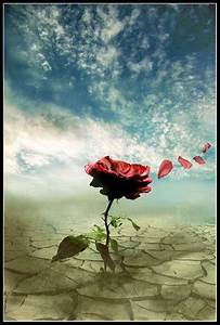 Wolken In Rose : petali di rose ponza racconta ~ Orissabook.com Haus und Dekorationen