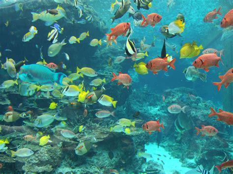 file fish in okinawa churaumi aquarium jpg