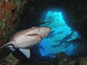 Shark Cave Diving