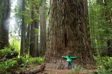 national parks passes  families