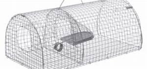 Piege A Rat Castorama : piege a souris castorama taupier sur la france ~ Voncanada.com Idées de Décoration