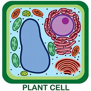 3 Unlabeled Plant Cell Pictures In Cell