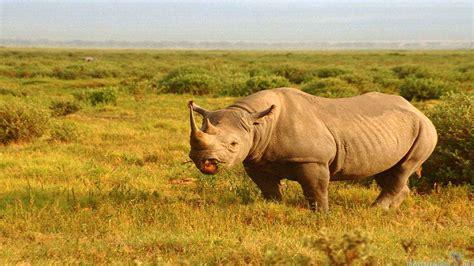 Safari Animal Wallpaper - safari wallpaper wallpapersafari