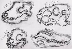 Animal skulls 2 by Windymon on DeviantArt