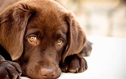 Dog Wallpapers Puppy Cave