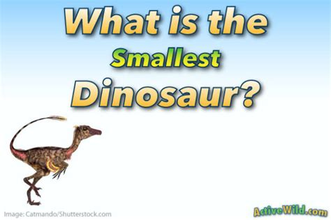 What Is The Smallest Dinosaur List Of Small Species With