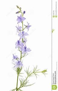 Wild Flowers Isolated Stock Photography - Image: 34451722