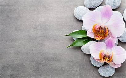 Orchid Tropical Pink Flowers Orchids Desktop Wallpapers