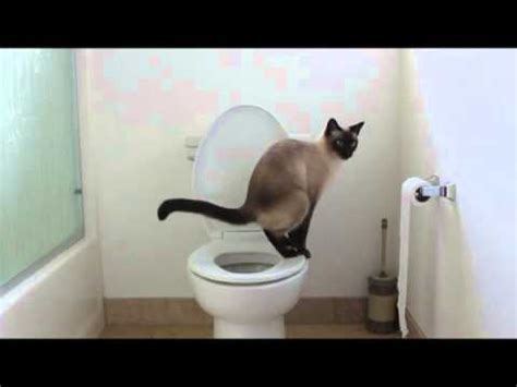 how to cat to use toilet cat uses toilet no more kitty litter