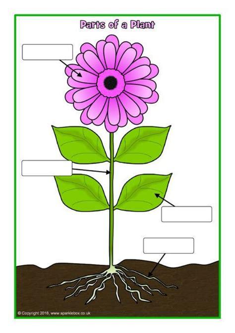 simple parts   plant posterworksheet sb