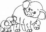 Coloring Elephant Adult Popular sketch template