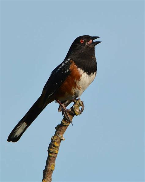 a few birds near victoria bc paul cipywnyk s blog