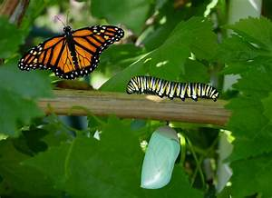 Can A Butterfly Remember Its Life As A Caterpillar