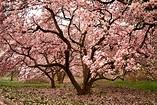 Growing Magnolia Trees | ThriftyFun