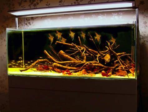 How to set up an Amazon themed aquarium — Practical
