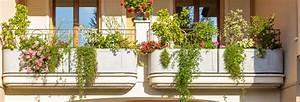 Hängepflanzen Für Balkonkästen : bildquelle gonewiththewind ~ Michelbontemps.com Haus und Dekorationen