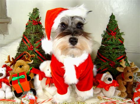 holiday gifts for pets 1 800 petmeds cares