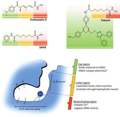 hdac inhibitor therapy  autoimmunity  transplantation