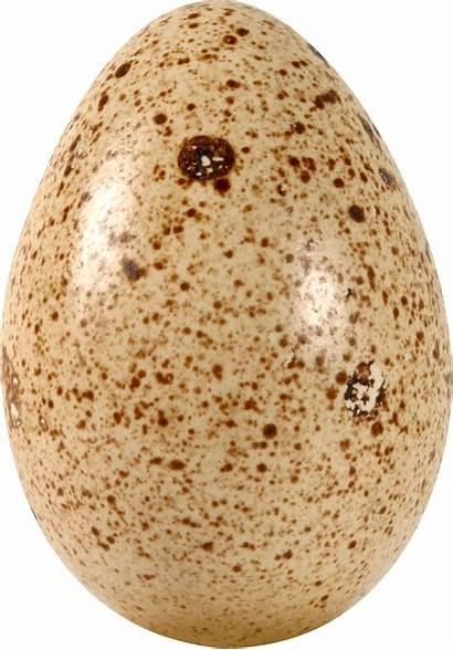 Egg Eggs Pngimg Kb