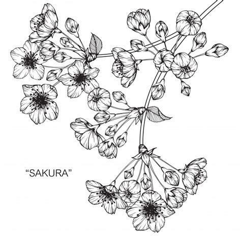 cherry blossom flower drawing illustration vector