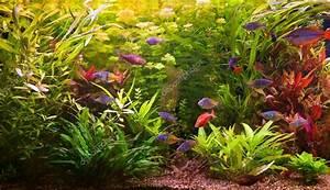 Bilder Mit Fischen : ttropical s wasser aquarium mit fischen stockfoto 13866565 ~ Frokenaadalensverden.com Haus und Dekorationen