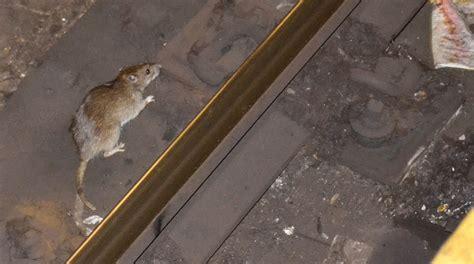 rats   york city wikipedia
