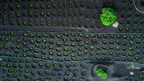 La Geria Vineyards Volcanic Vineyards Bing Wallpaper Windows Spotlight Images