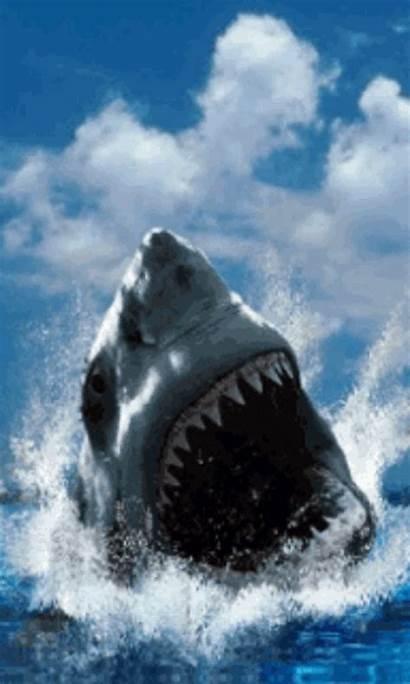 Shark Screensavers Screensaver Wallpapersafari