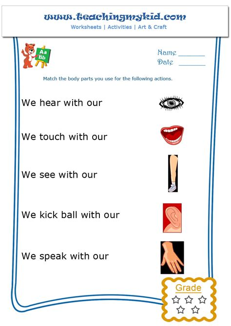 worksheets on parts for grade 1 homeshealth info