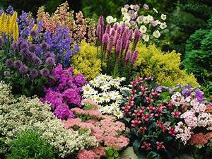 What Is A Perennial Plant
