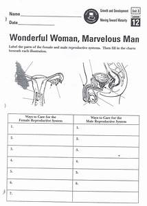 29 Female Reproductive System Diagram Quiz