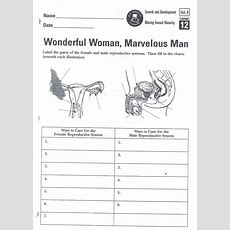 Human Reproductive System Worksheets