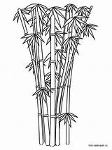 Bamboo Coloring Tree Printable Sketch Colouring Drawing Template Shoot Plant Cartoon Drawings 1000px Trees Sketches Recommended Paintingvalley Picolour 11kb sketch template