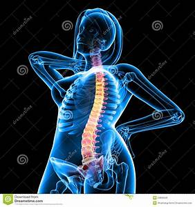 Front View Of Female Skeleton With Back Pain Royalty Free