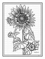 Sunflower Coloring Printable sketch template