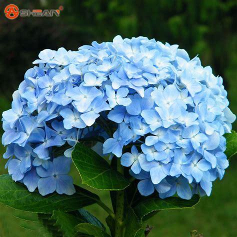 achetez en gros bleu hortensia en ligne 224 des grossistes