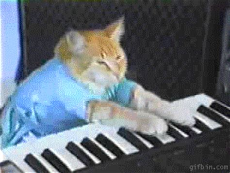 Cat Playing Piano Meme - keyboard cat gifs find share on giphy