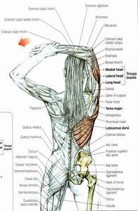 77 Best Anatomy References