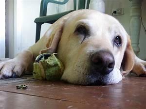 dog ball - DriverLayer Search Engine