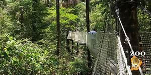 Artisanat De Guyane : zoo de guyane montsinery guyane evasion ~ Premium-room.com Idées de Décoration
