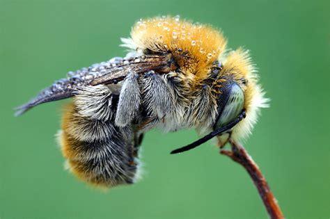 Bee Careful  Informationen Rund Um Die Biene Und Die Imkerei