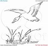 Duck Pond Flying Clipart Cattails Coloring Cartoon Pages Clip God Child Outlined Cattail Vector Picsburg Kid Clipground Cat Cooring Template sketch template