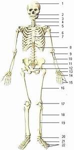 Biology   Skeletal System  U0026 Bones Of Human Body I