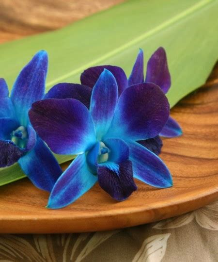what color is orchid color orchids with our aloha