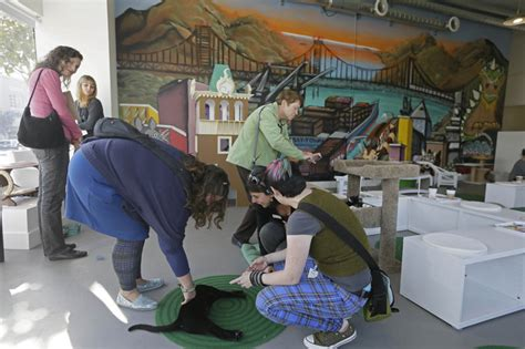 cat cafe california californians pile into cat town cafe where 10 earns one