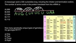 Nucleotide To Amino Acid Conversion Table